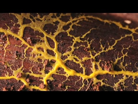 Lens of Time: Slime Lapse | bioGraphic