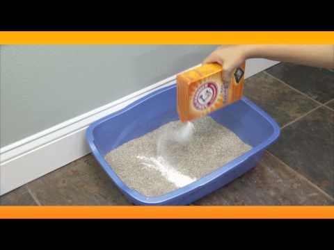 Eliminate Litter Box Smell:  Baking Soda Solutions