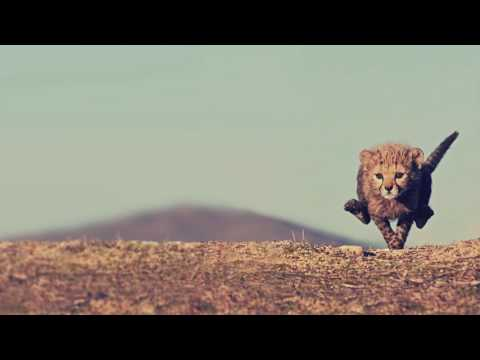 Ras Stone & Dub Terminator - Mamma Africa ft Naram (2014)