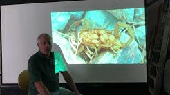 The only Scorpion Pest Control That Works Explained The Pest Border