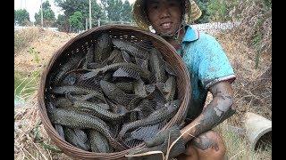 鱼塘里的清道夫鱼泛滥,小池放干水抓满一大箩,通通都把它埋了