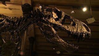 T-Rex zeigt Berlin die Zähne