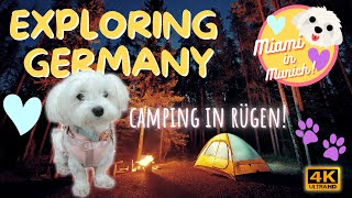CAMPING ADVENTURE IN RÜGEN ⛺ Exploring Germany!    CUTE MALTESE TRAVEL DOG VIDEO IN 4K