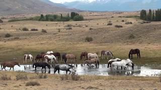 Estancia près de El Calafate, Patagonie argentine