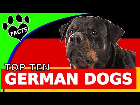 TopTenz: Top 10 German Dog Breeds - Animal Facts
