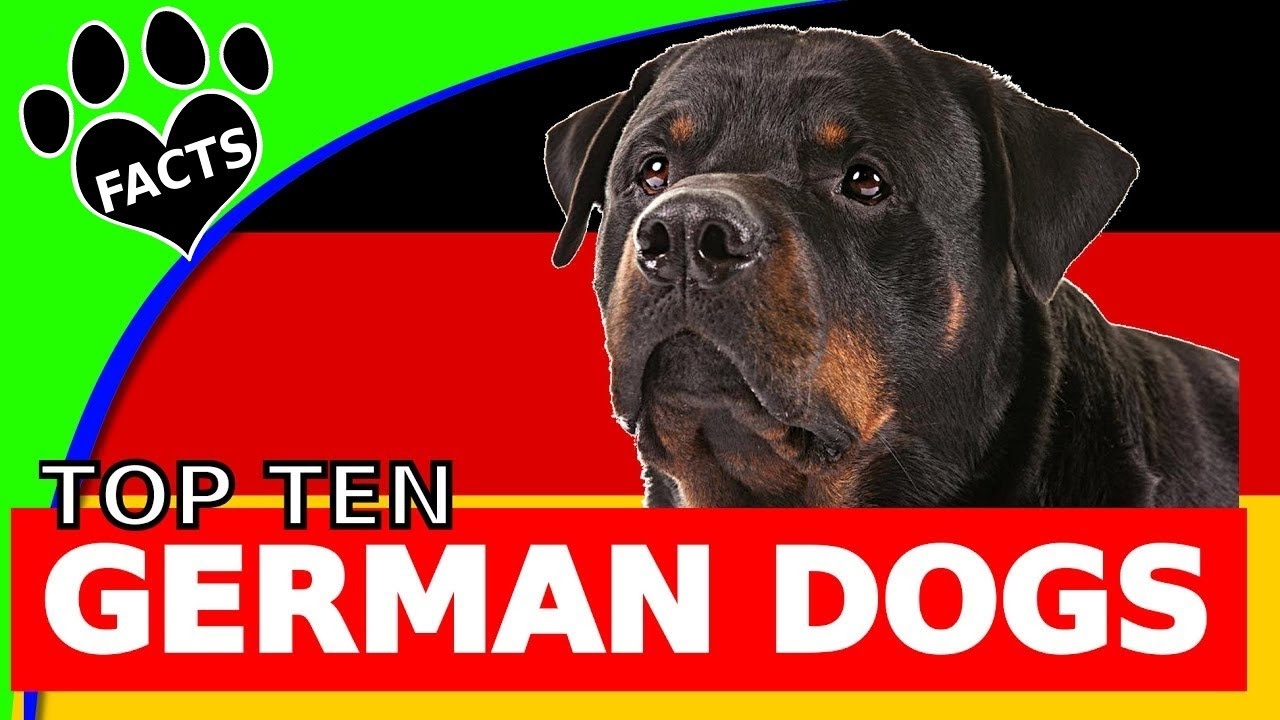 Breed Deutsch
