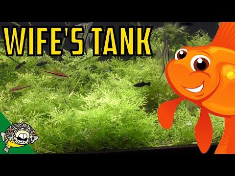 Trimming the 230 Gallon Planted Aquarium aka The Wife's Tank.