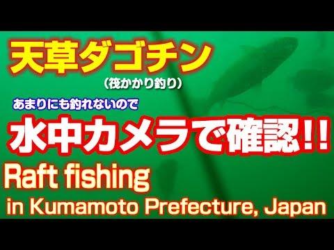 チヌ メジナ天草楠森島横でダゴチン筏 かかり釣り釣れなさ過ぎてカメラを沈めてみた結果|Raft fishing in Kumamoto Prefecture, Japan