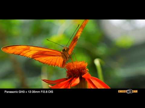 Panasonic GH3 + 12-35mm F/2.8 HD 1080 Video Samples