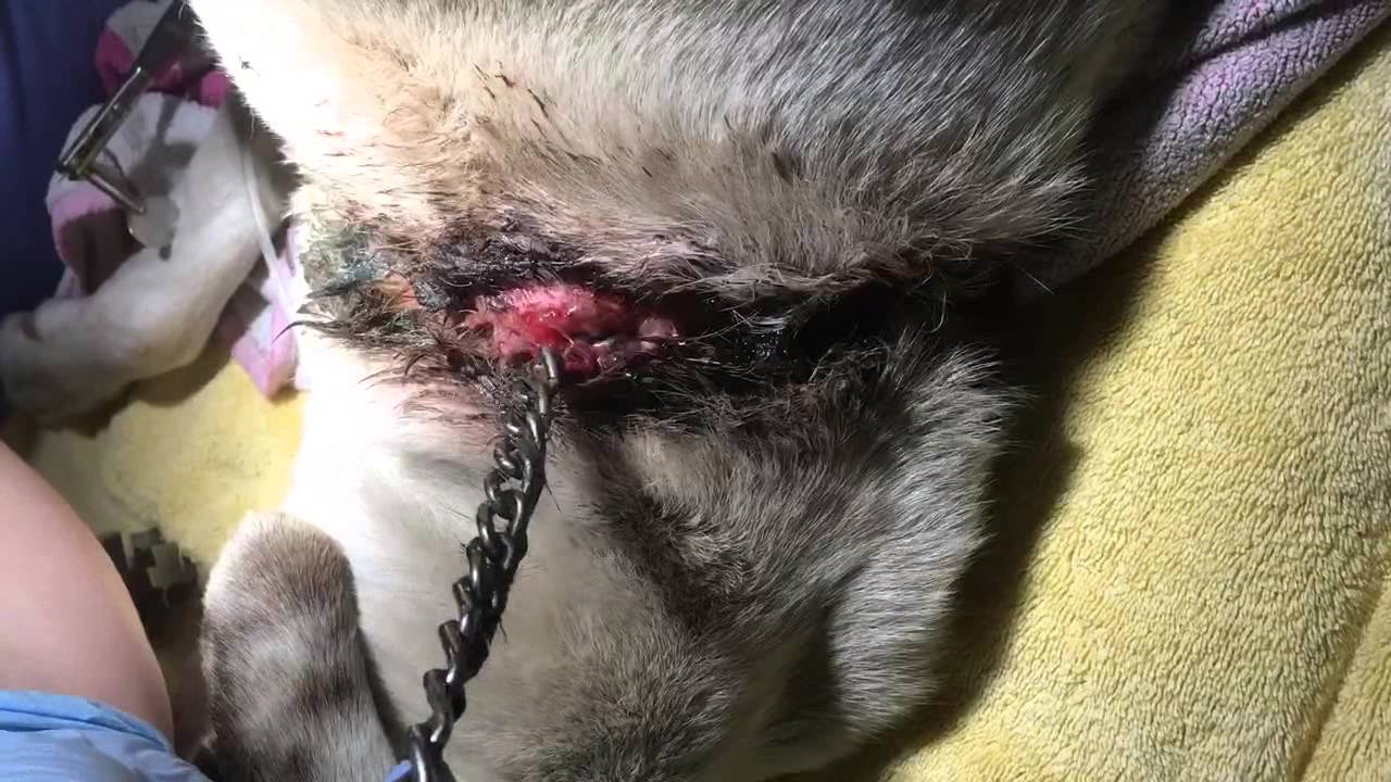 Dixon S Embedded Collar Youtube