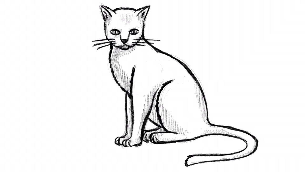 Tiere Zeichnen Lernen Viele Video übungen Zum Nachmachen