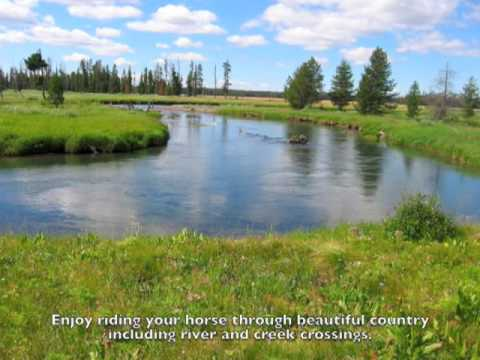 Yellowstone National Park Horseback Riding With Dry Ridge Outfitters