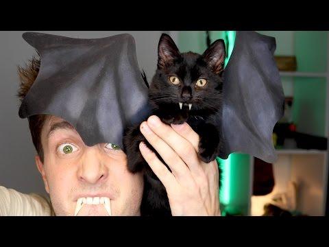Bat Cat Costume 😂 | Halloween DIY