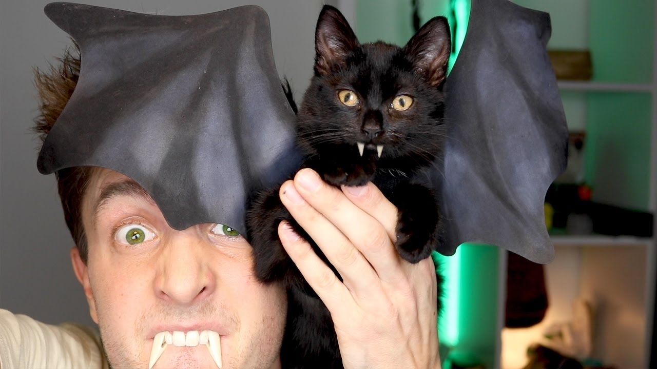 Vleermuis Kitten Costuum Halloween Diy