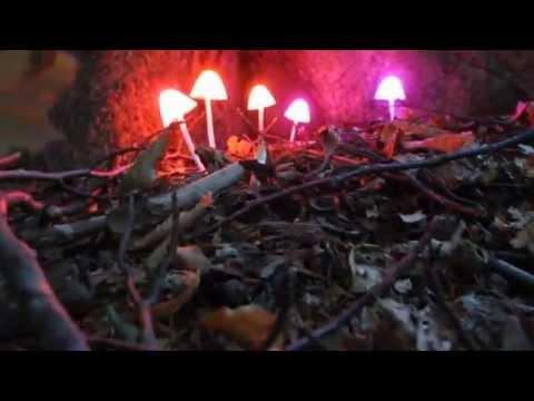 RGB Mushroom illumination tests