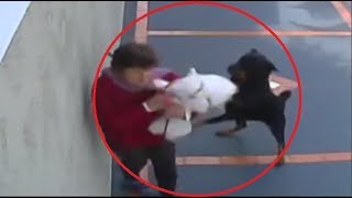Rottweiler snatches the dog off owner's hands!!!