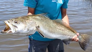 MONSTER 30 INCH TROUT & FLOUNDER Catch Clean and Cook