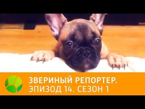 Телеканал ОРТ Планета. Прямой онлайн интернет эфир. ТВ России.