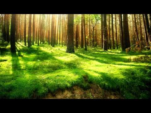 3 Hours of Study Relaxation Music- Music for Reading and Studying- Study Background Music