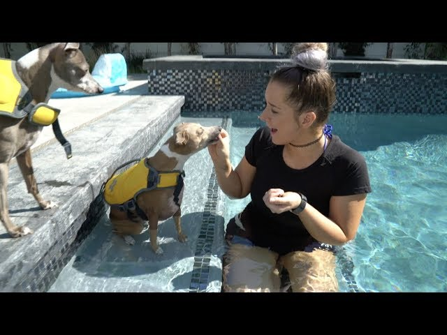 Teaching My Dogs How To Swim