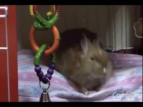 Migliori video di animali divertenti che dormono in piedi for Youtube cani e gatti