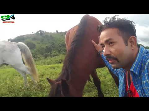 Horse riding in Nepal