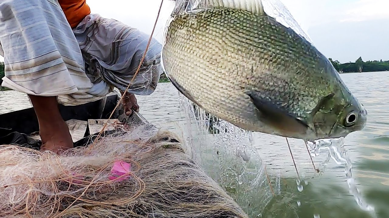 Best Traditional Net Fishing in River। Primitive Fish Catching by Net