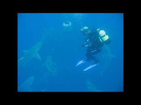 Scuba Diving with Sharks. Protea Banks Suth Africa. Shark Infested Water, personal Sharknado !