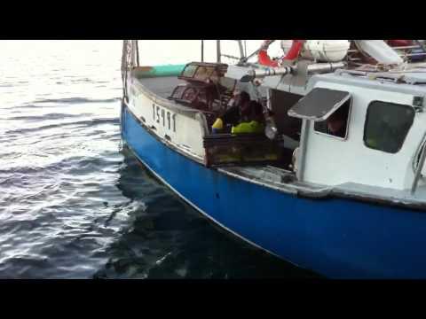 Lobster fishermen Halifax harbour