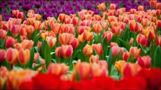 Antonio Vivaldi: Laetatus sum [psalm 121] in F major (RV 607)