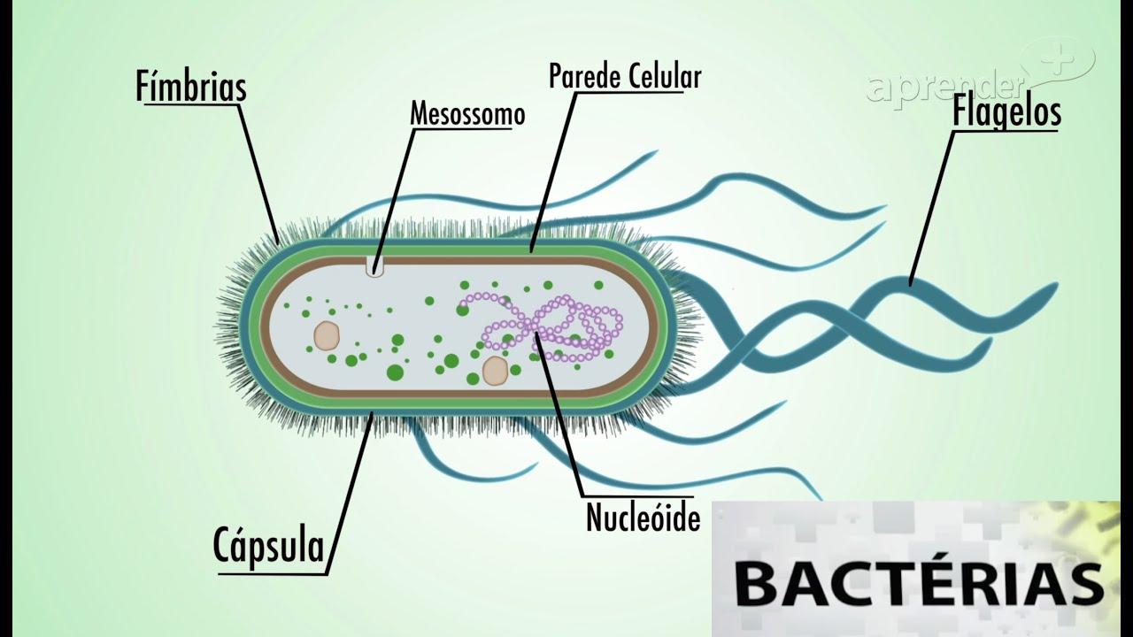 bacterie versus virus)