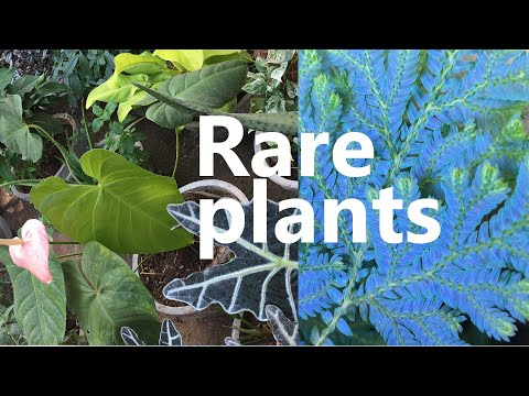 Rare Plants | 50+ Plants With Their Names