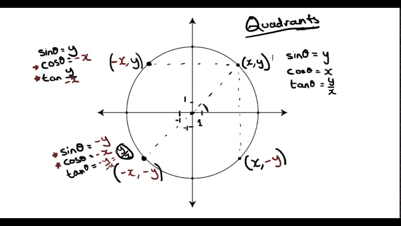 Diagram Of The Four Quadrants Dog Internal Anatomy Gallery For Gt Unit Circle