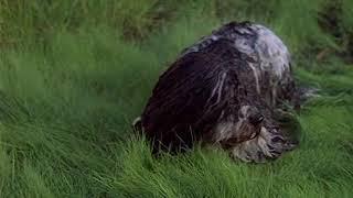Музыкальный фрагмент из фильма «Мэри Поппинс, до свидания», 1983 год