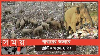 জঙ্গল ছেড়ে ময়লার ভাগাড়ে খাবার খুঁজছে হাতির দল | Sri Lankan Elephant | Somoy TV