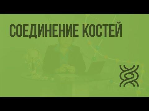 Видеоурок соединение костей