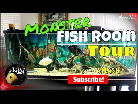 Fish Room Tour | Monster Fishkeeping 101 | Growing Monster South & Central American Cichlids