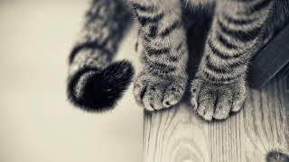 Что делать, если кошка линяет очень сильно круглый год, но не лысеет?