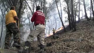 Incendio en bosque La Primavera afecta cerca de 30 hectáreas