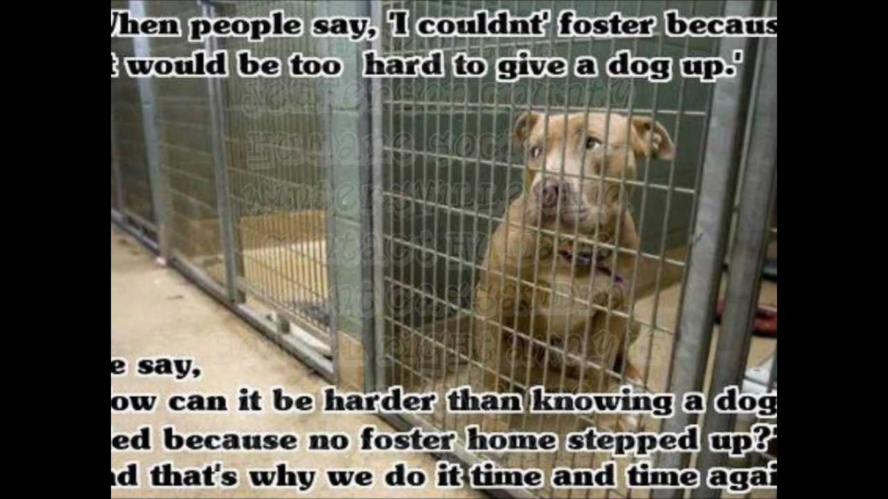 Dog Adoption Shelters In Ohio