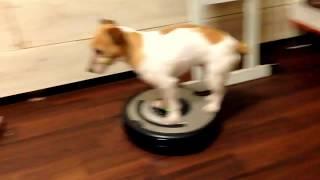 Śmieszne zwierzęta psy i koty 2018  - смешные собаки и кошки - Funny videos