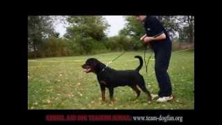 Rottweiler Jho Schwarz Rott.garde - Training