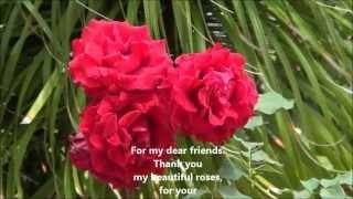 All Kinds of Roses. Yusuf Islam/Cat Stevens