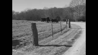 KC Cattle Company Tour