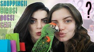 funny parrots