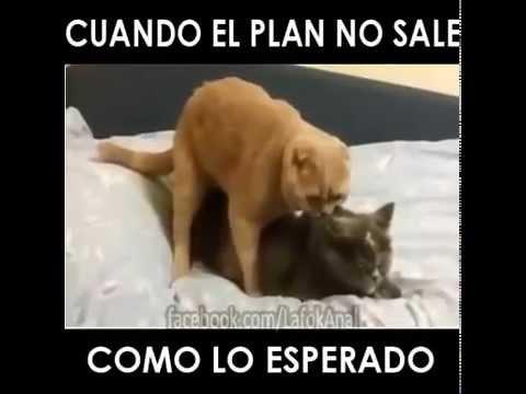 plan gay 54