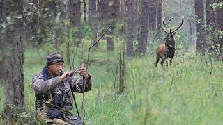 Как подвабить царя оленей - How to lure the king's deer - wildlife