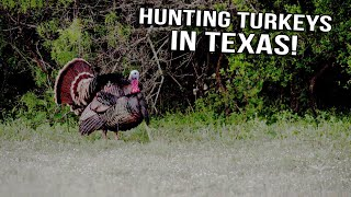 Just The Hunt- SemiLive Hunting Action- Thunder Chickens in Texas