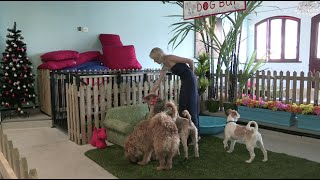Five-star Dog Hotel Opens in Cape Town