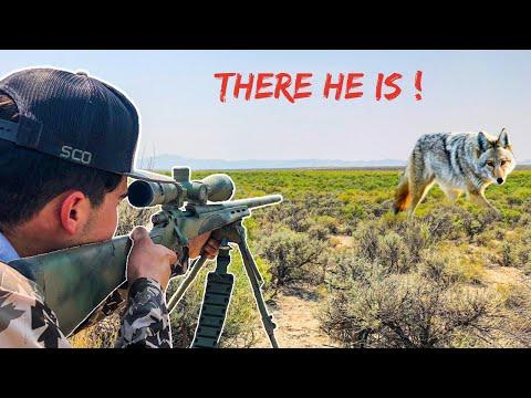 CRAZY Coyote Hunting VLOG ( HEAD SHOT! )